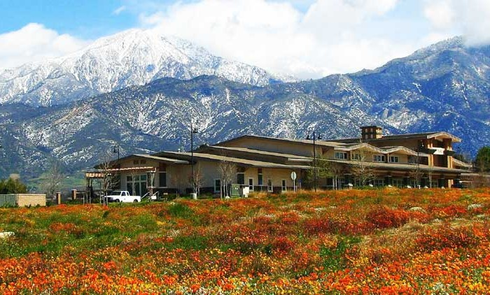 Yucaipa Real Estate for sale and rent